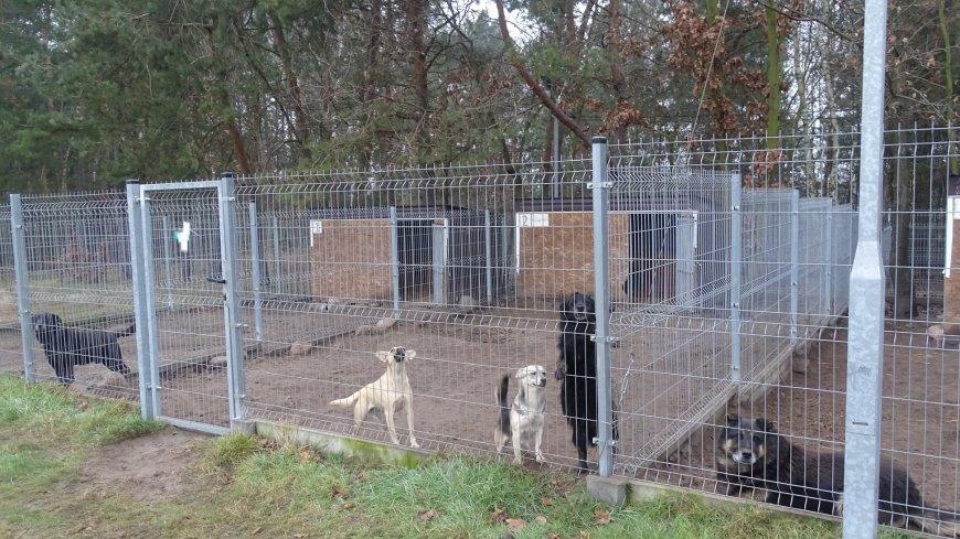 Zdjęcie psów przebywających w schronisku Kocham Psisko - Psy do adopcji